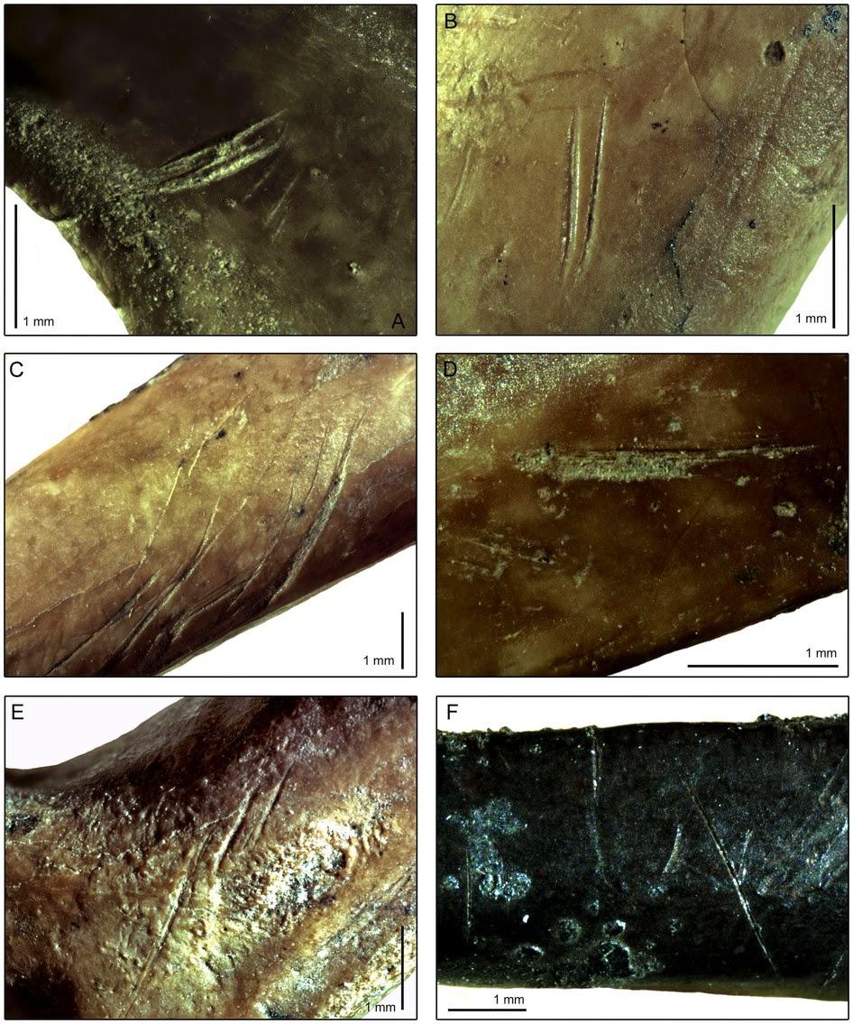 που χρονολογείται από τα πρώτα ανθρώπινα οστά