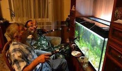 gambar lucu mancing di akuarium