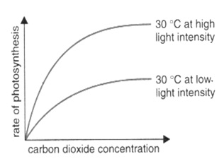 How does pH affect photosynthesis?