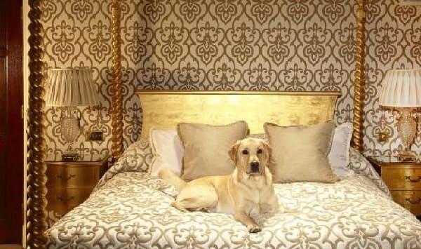 بخدمات خيالية قلّما يحلم البشر بمثلها,  فندق خاص للكلاب!!