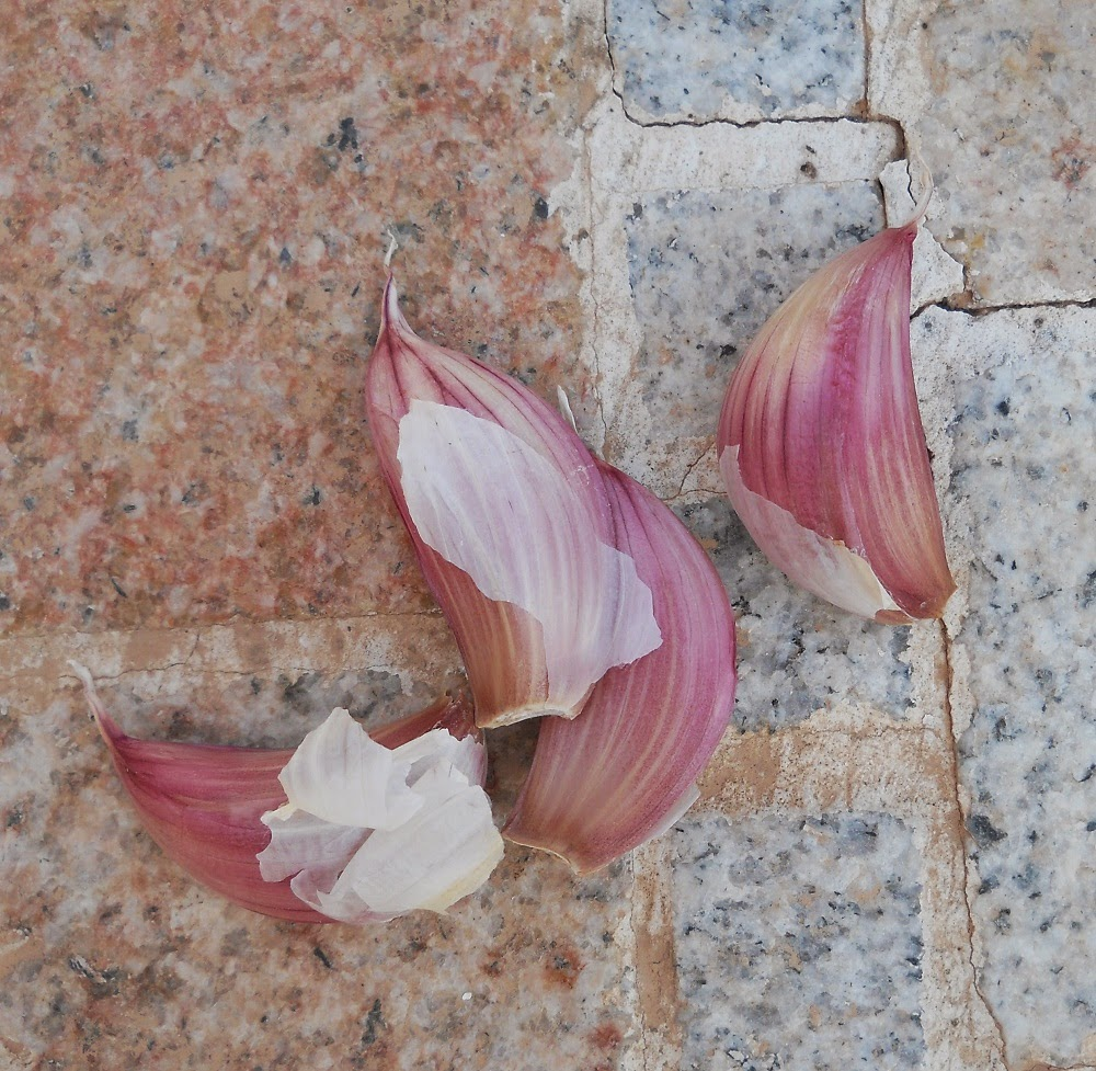 dientes de ajos para plantar