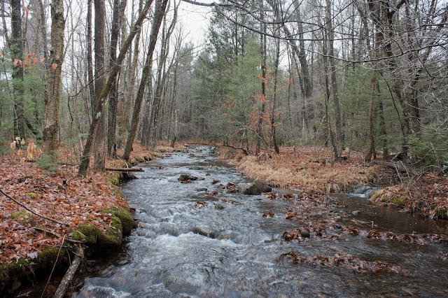 A Wild Brook Trout Stream on Mt. Wachusett