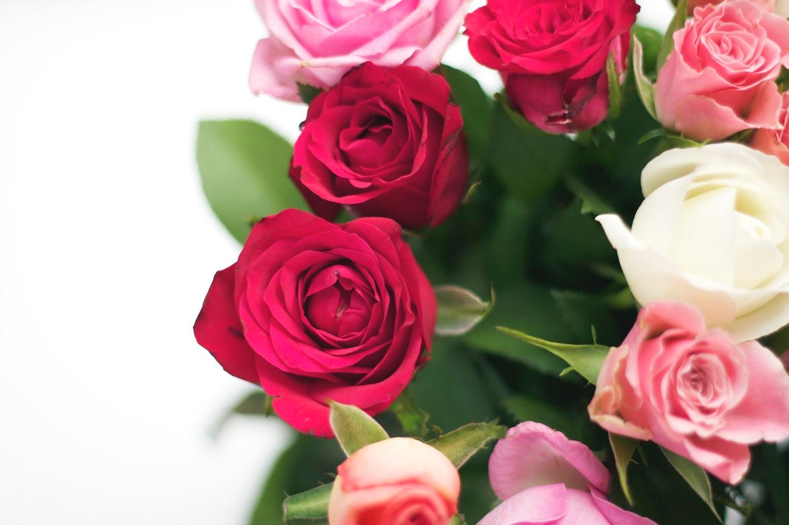 Rose, Roses, Flowers, Beauty Blog Flowers, Photography, 50mm Lens, Beauty blog, BBloggers, Derbyshire, Belper, Bloom, Beauty,
