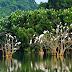 Những điểm đến đầy hấp dẫn của mảnh đất Ninh Bình