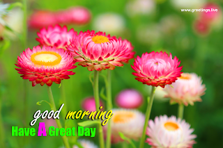 good morning have a great day greetings with flowers Images.