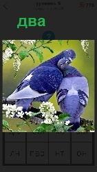 два голубя на ветке