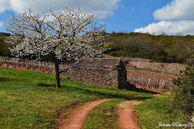 Randonnée dans les vignes près de Mâcon