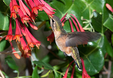 what color are hummingbirds most attracted to