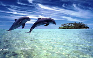 Meditációs zenék/Relaxációs zenék: ♫ Delfinek éneke ♫ Az óceán dallama ♫ Relaxáció ♫