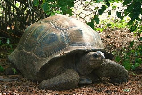 How Do Tortoises Drink Water