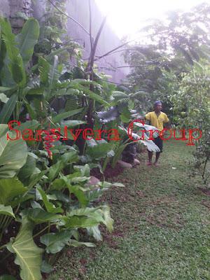 Taman-tropical-bali