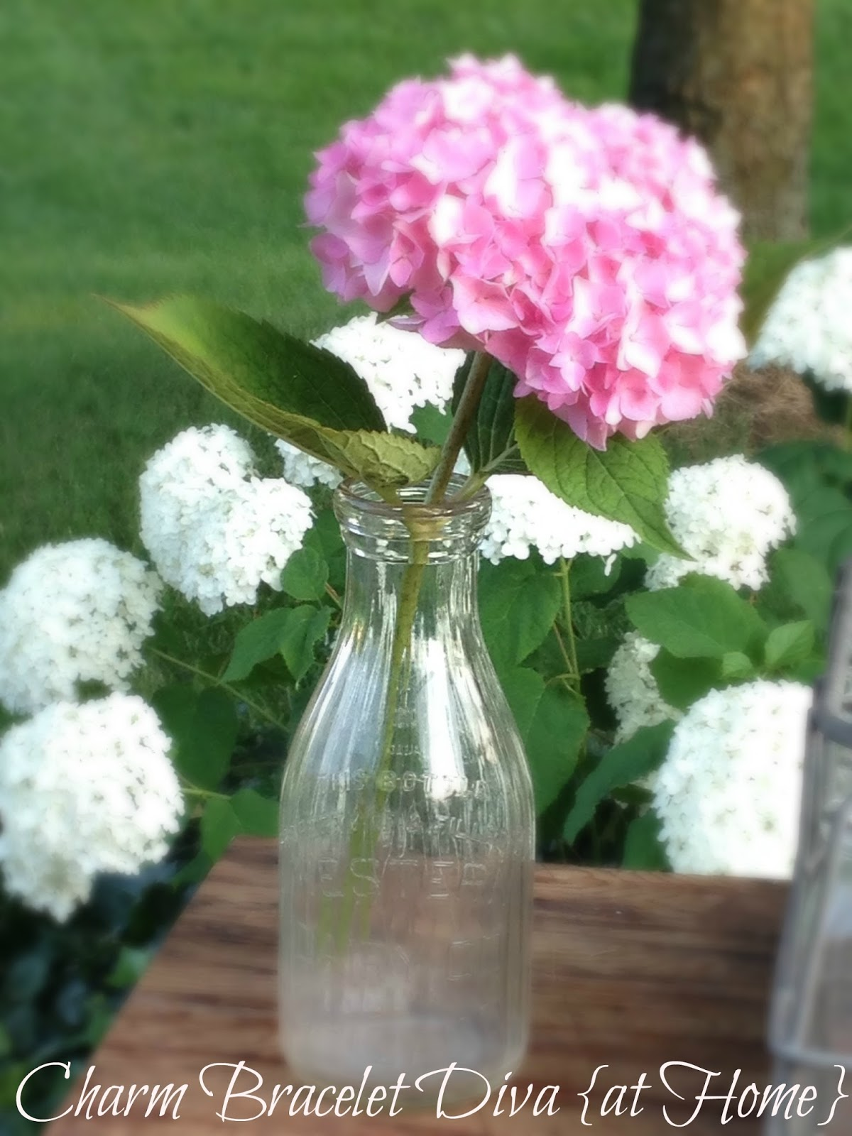 hydrangeas in vintage milk bottles