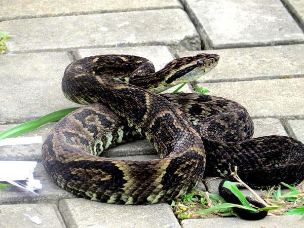 Menino de 5 anos foi picado por cobra no interior de Canoinhas