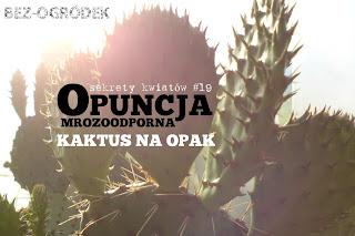 sekrety kaktusów