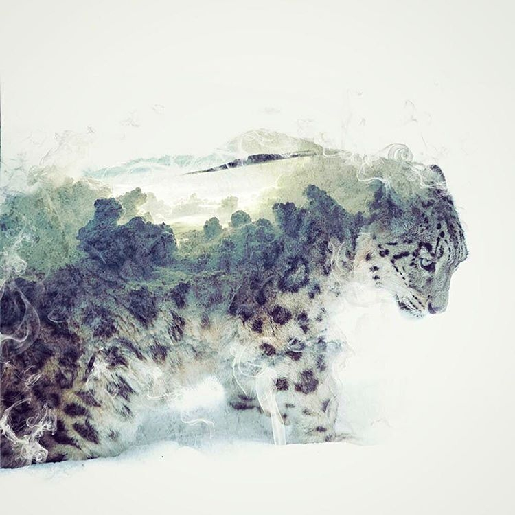 04-Snow-Leopard-Daniel-Taylor-Ghostly-Animals-in-Manipulated-Photographs-www-designstack-co