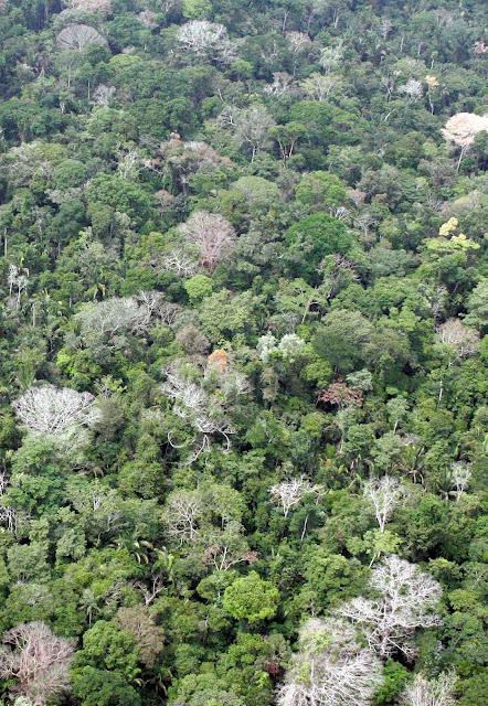 """Esta área indígena continuará séculos sem tirar nem pôr CO2 do ar. A renovação da vegetação, só possível com desmatamento inteligente, permitirá captar o CO2.Mas a """"barbárie científica"""" não sabe disso."""