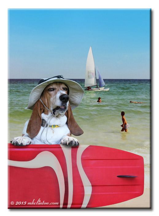 Basset Hound with red surf board on beach