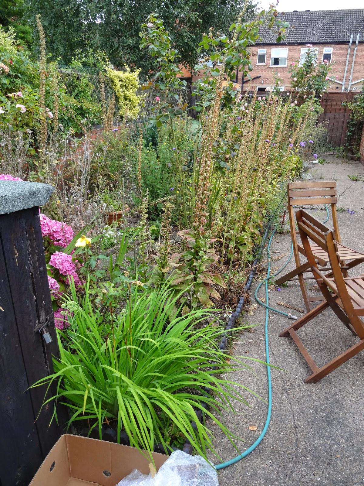 victorian terrace with overgrown garden