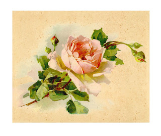 rose flower artwork image digital download iamge