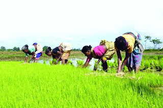 Cooperatives Department of Maharashtra takes steps to enhance Agribusiness