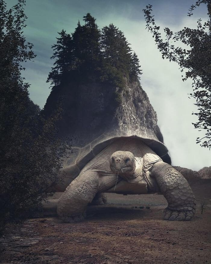 06-Tortoise-Hill-Stalowa-Wola-Surreal-Photos-of-Landscapes-and-Architecture-with-Animals-www-designstack-co