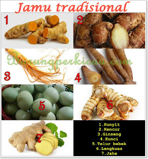7 jamu tradisional untuk ayam bangkok