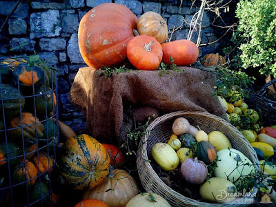 Squash Growing Guide for the Home Gardener
