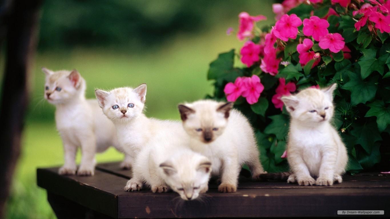 Wallpapers free desktop wallpaper wide screen - Free wallpaper of kittens ...
