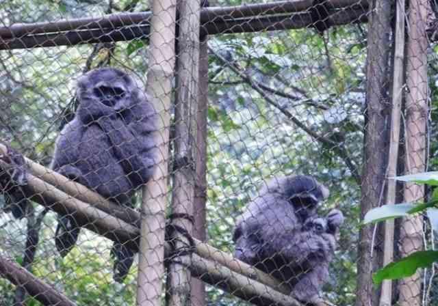 Wisata Edukasi Pusat Rehabilitasi Primata Jawa