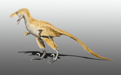 Bambiraptor | facts | size