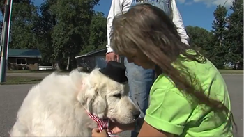 cão eleito prefeito