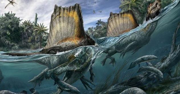 Spinosaurus Fosil