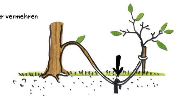 gemeinsam g rtnern in dresden strehlen workshop zur pflanzenvermehrung am sonntag. Black Bedroom Furniture Sets. Home Design Ideas