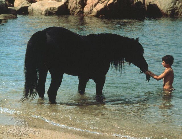 in so many words...: Horse-A-Thon: THE BLACK STALLION ...