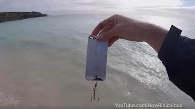 [Video] Ikan Doyan iPhone, Ini Buktinya