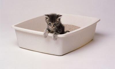 Cara Menghilangkan Kebiasaan Kucing Berak Sembarangan