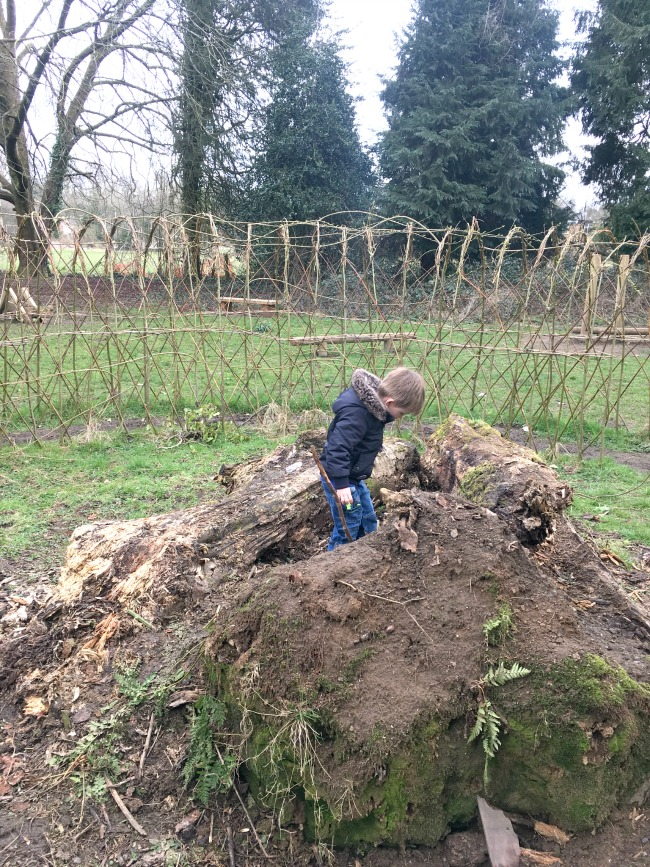 boy-exploring-the-root-plate-of-a-fallen-tree
