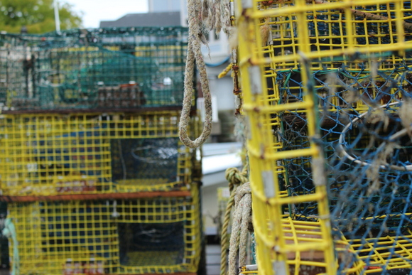 These containers are used for catching fresh seafood and fish.