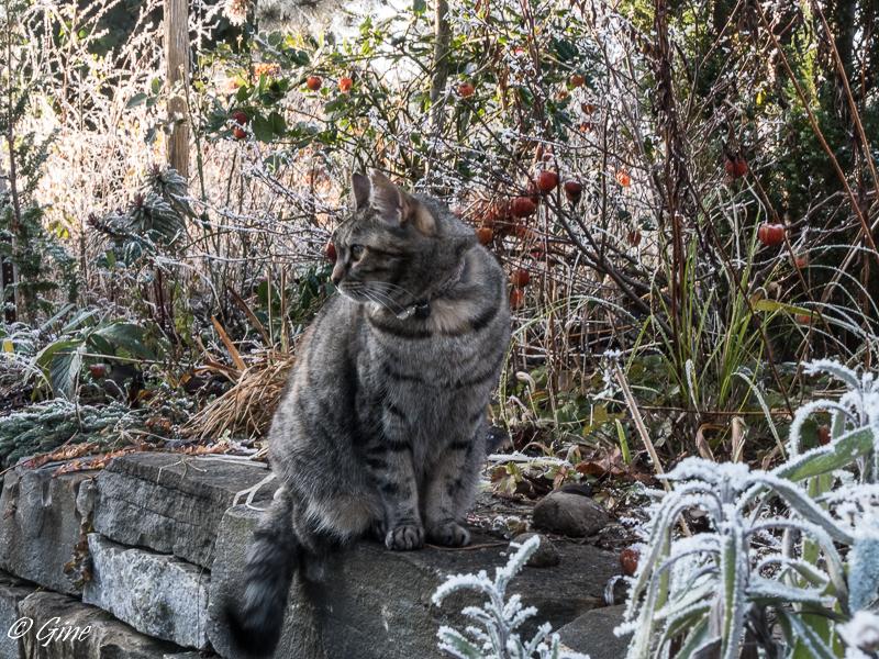 Au jardin de gine hiver for Hiver au jardin