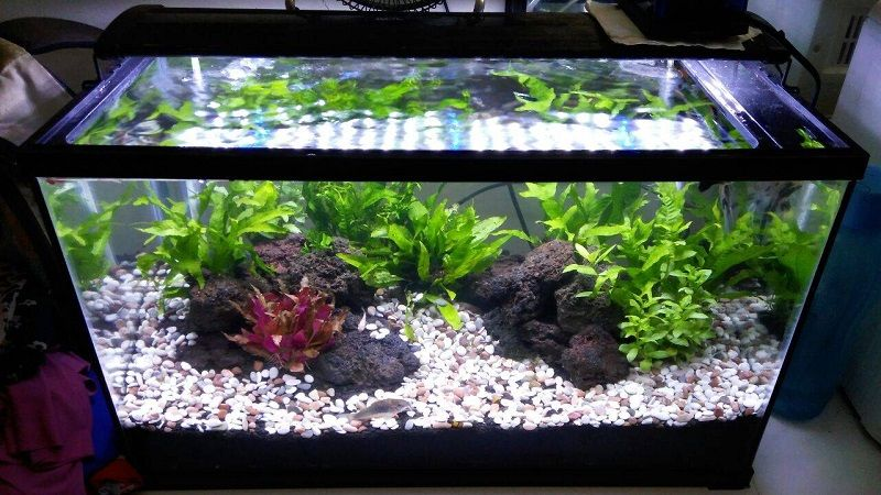 Gambar Aksesoris Aquarium Batu Hias Murah-Batu koral Pancawarna aquarium