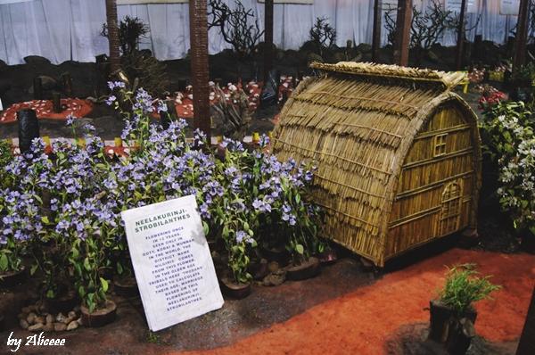 gradina-de-plante-artificiale-Ooty