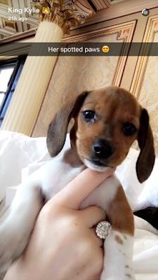 kylie jenner snapchat dog puppy birthday