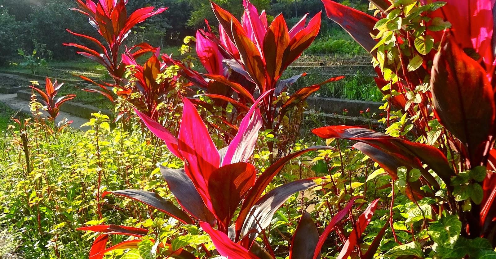 Jardim Botânico Chico Mendes em Santos