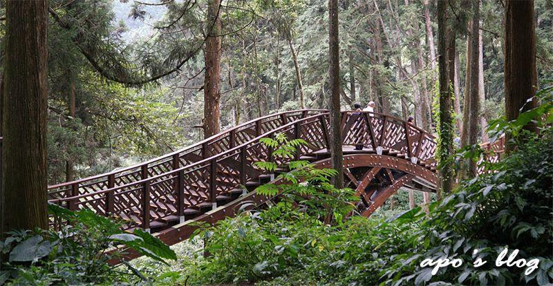 隱於森林中的銀杏橋