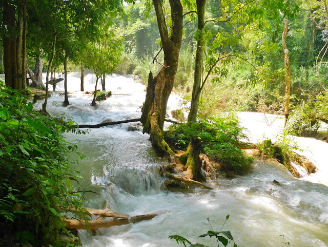the lowest tier of the kuang si falls in Luang Prabang laos