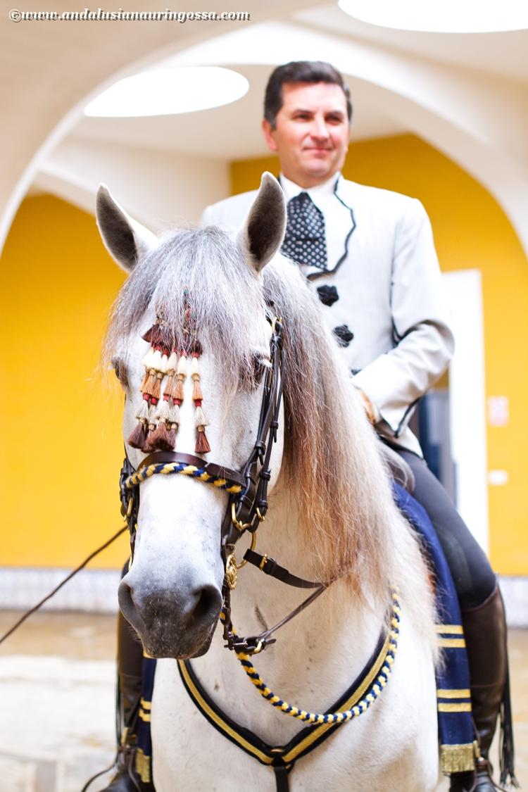 Andalusian kuninkaallinen hevoskoulu Jerez_Andalusian Royal Equestrian School Jerez_13