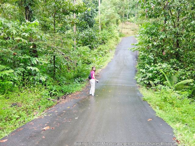 roadside birding in Manado