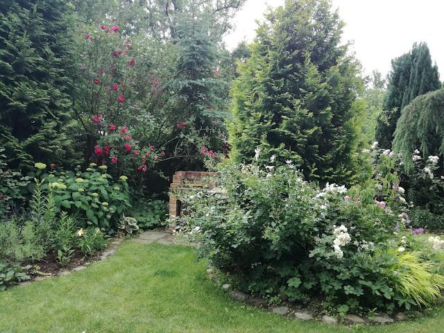 podział przestrzeni w ogrodzie, działka ROD