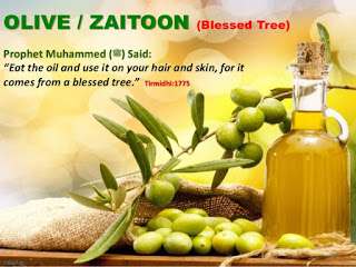 Olive Benefits in the Light of Quran