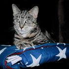 www.catsinthecradlesoap.etsy.com